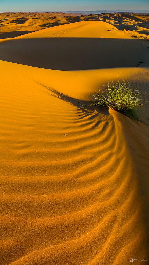 Rippled sea of sand